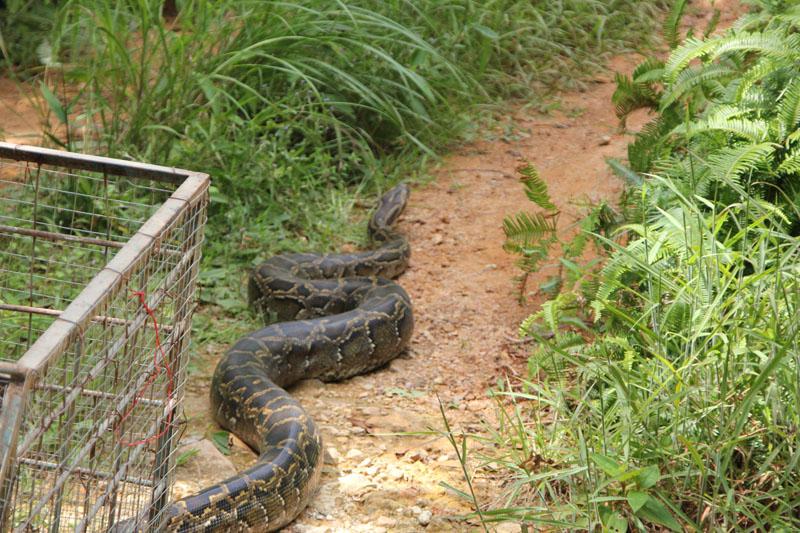 保护野生动物资源