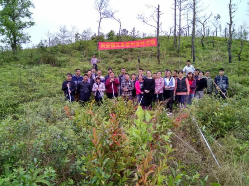 凤安镇开展义务植树造林活动