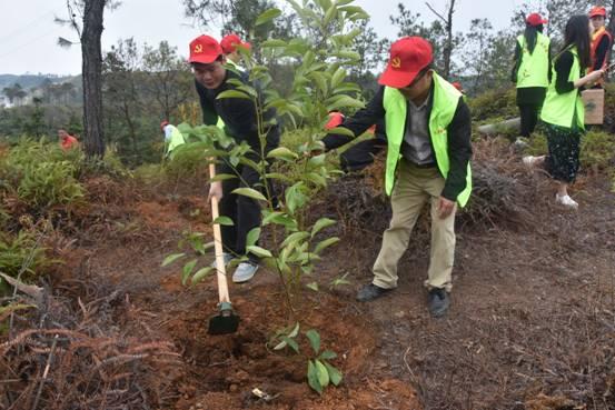 紫城镇开展义务植树大活动